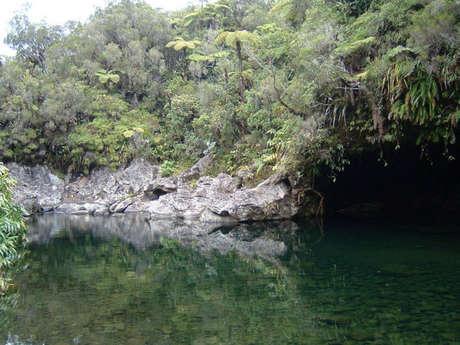 Bassin des Hirondelles