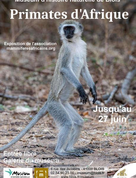Exposition photo sur les primates d'Afrique