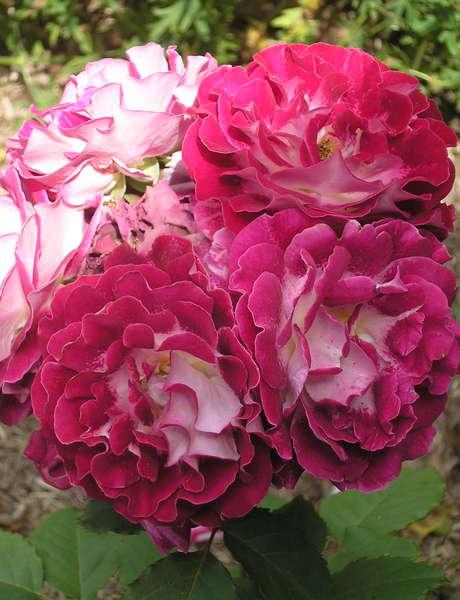 Inauguration de l'Escapade des Roses