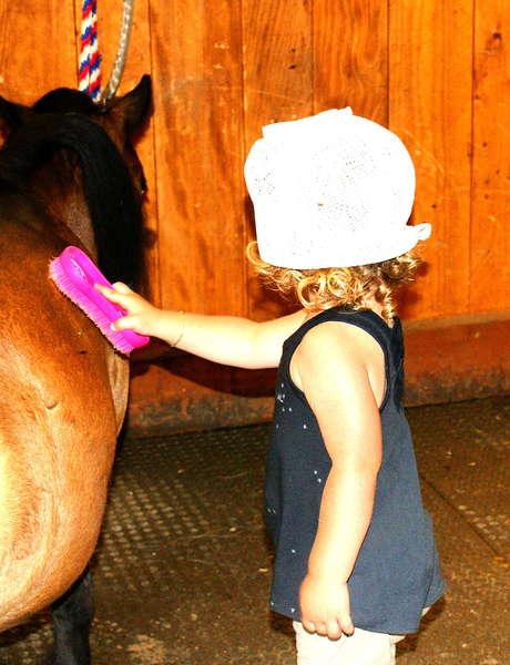 Pony und Pferde im Fondation Domus