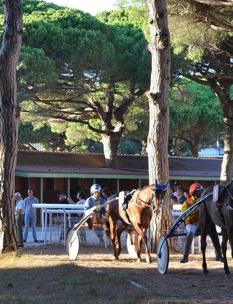 Courses hippiques à l'hippodrome d'Hyères