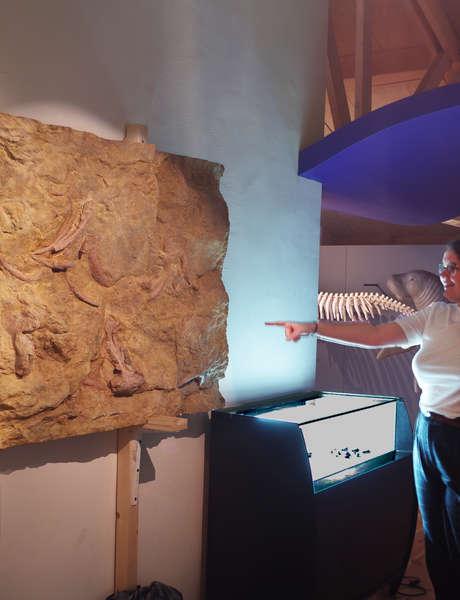 Exposition Sirènes et Fossiles