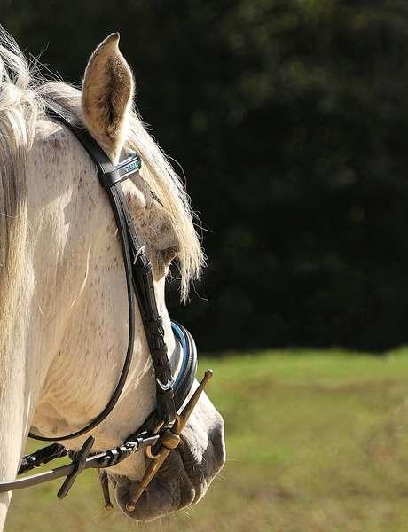 Activité coup de coeur :Randonnée à cheval