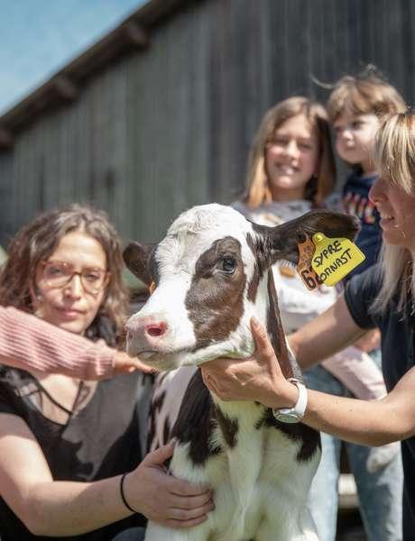 Lait, yaourts... un parcours fermier pour tous