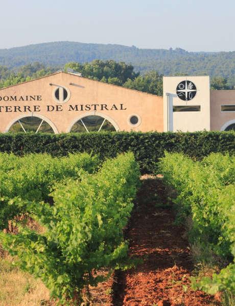 Visite guidée en anglais des ateliers viticoles et oléicoles suivie de dégustations
