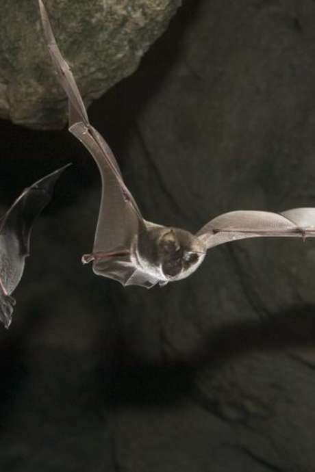 Exposition de photos d'Olivier Farcy sur les chauves-souris