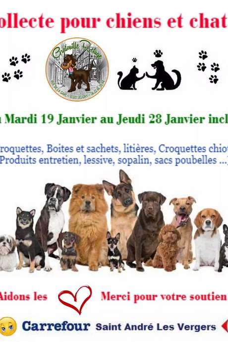 Collecte pour chiens et chats