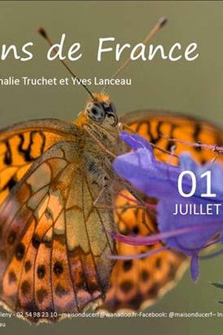 Exposition : Les Papillons de France