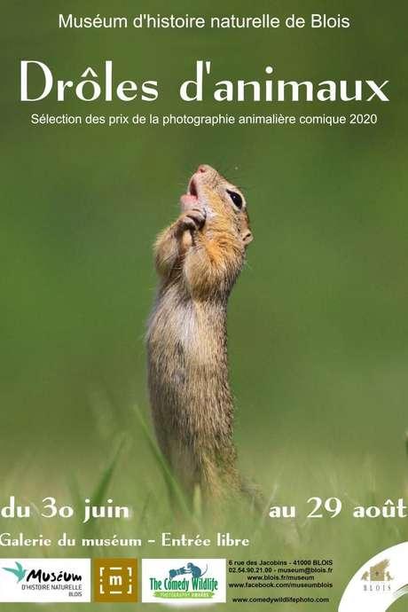 Exposition photo : « Drôles d'animaux »