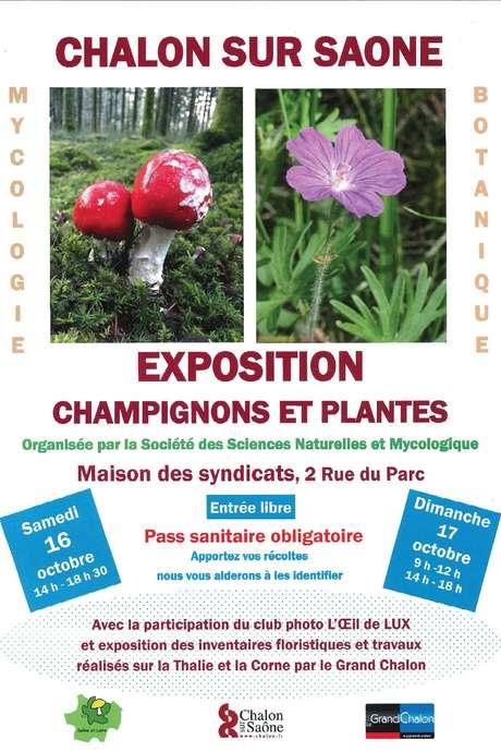 Exposition Champignons et Plantes