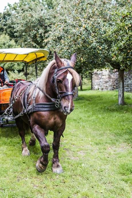Foire aux chevaux à Kérien