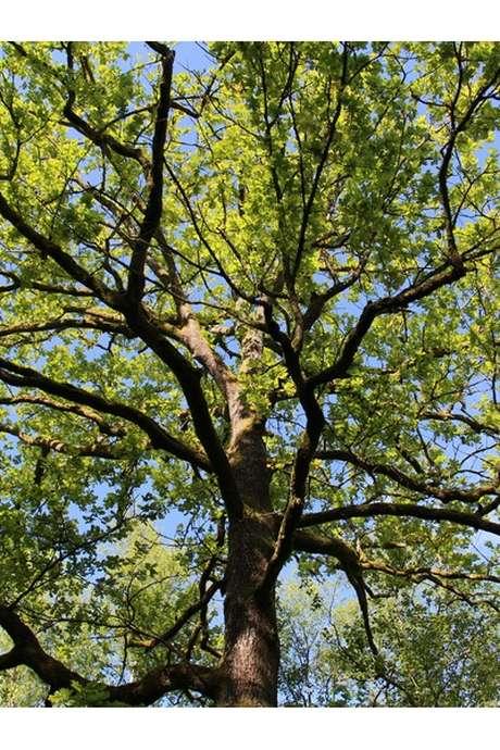 Rendez-vous nature : Gérer une forêt ?
