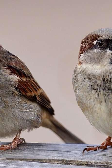 Fabrication d'un mangeoire à oiseaux et son sac de graines
