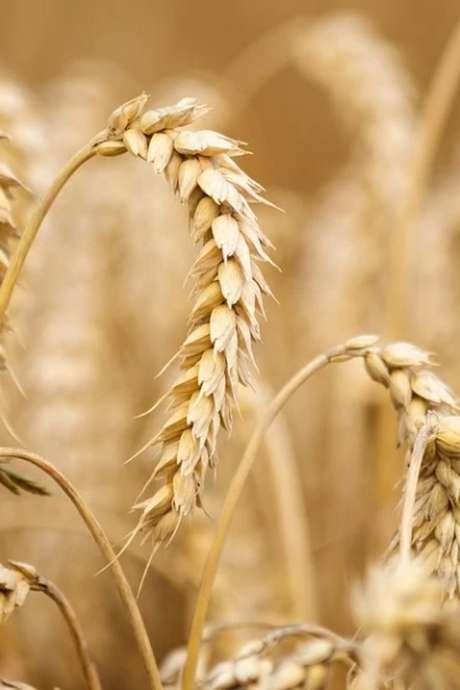 Conférence sur le changement climatique et l'agriculture