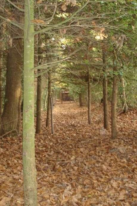 Enquête nature… en forêt