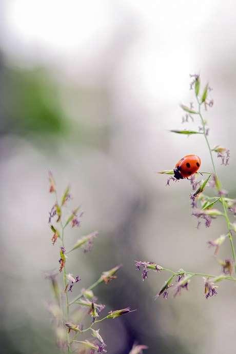Le petit monde de l'herbe