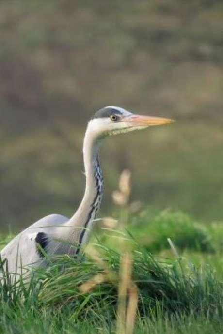 Découverte des oiseaux du marais