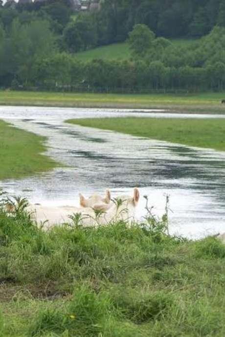 Découverte de la Réserve Naturelle du marais