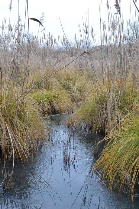 Zones Humides: Réservoirs de Biodiversité