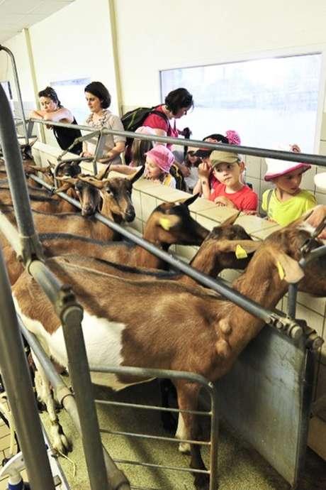 Traite des Chèvres à la Ferme la Borie d'Imbert