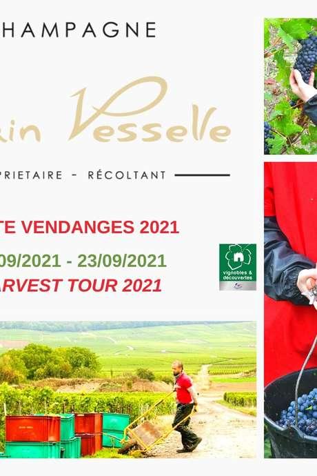 Visite vendanges 2021 au Champagne Alain Vesselle