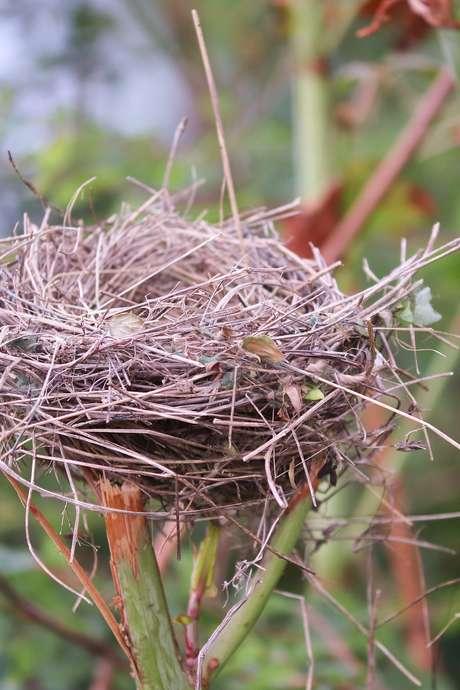 Oiseaux chanteurs, nicheurs et migrateurs