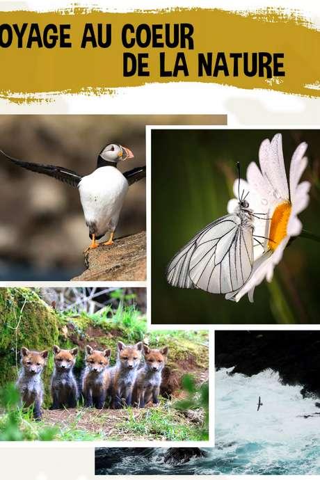 Exposition : voyage au coeur de la nature
