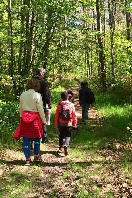 Bain de forêt en famille