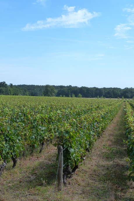 Rando-Vignes en Trottinettes Electriques avec Trott'ecow