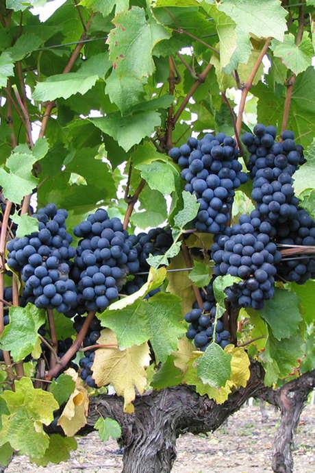 Pique-nique chez le vigneron indépendant au Vignoble Dubreuil à Couddes
