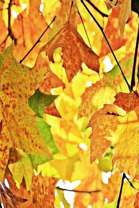 Instant nature Pépites d'automne - Vallée du Cher - Montrichard