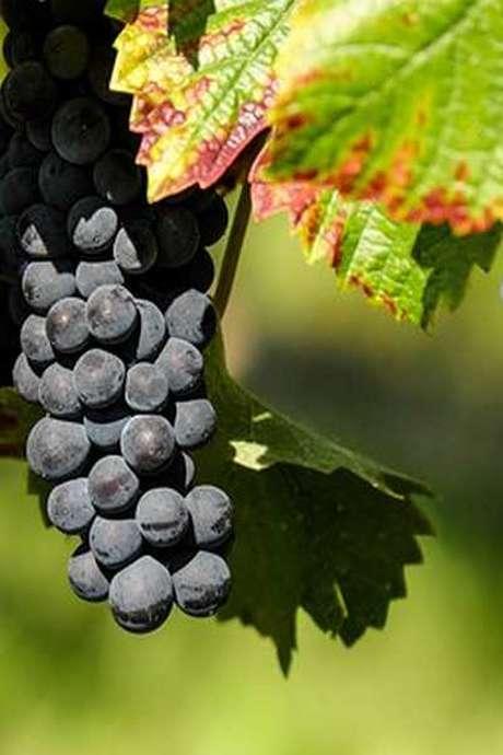 Pique-nique chez le vigneron indépendant au Domaine de la Girardière à Saint-Aignan