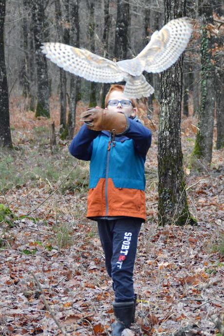 Une chouette expérience - Initiation à la fauconnerie