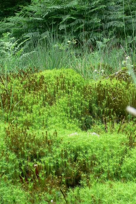 Balade nature : randonnée nature en Vallée de Commeauche