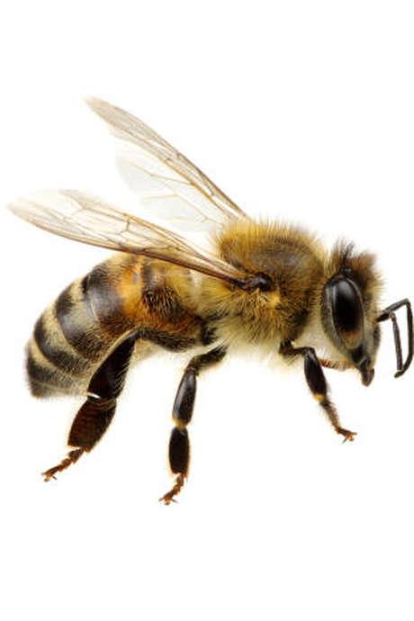 Exposition sur les abeilles à Aulon