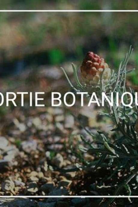 Sortie nature - spécialisée botanique