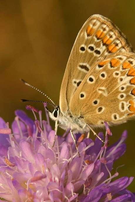 ENS2021-Flore et faune des falaises calcaires des côtes de Beaune