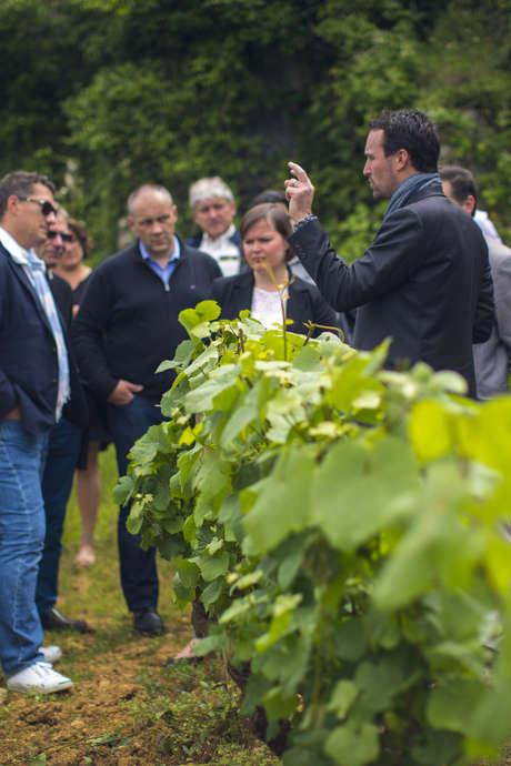Journée découverte des vins de Bourgogne