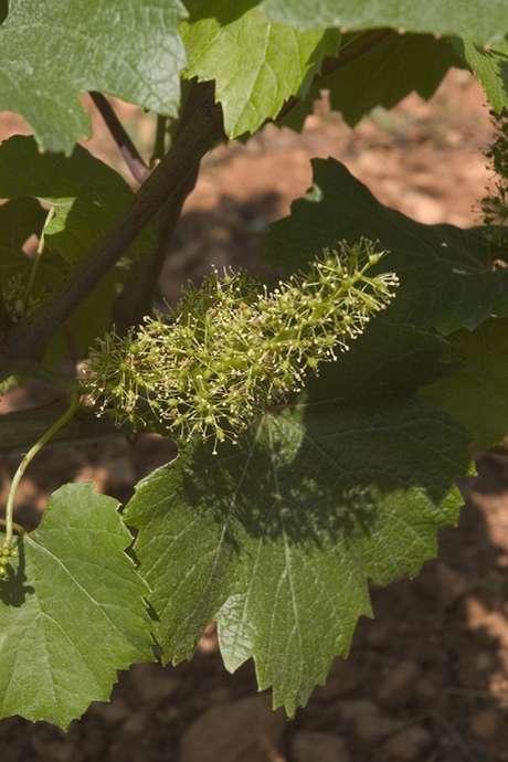 Soirée thématique 'Vignes et Vins'