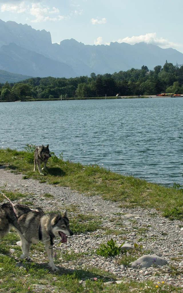 Alpi-Traineau : Rand'O chien de Train'O été