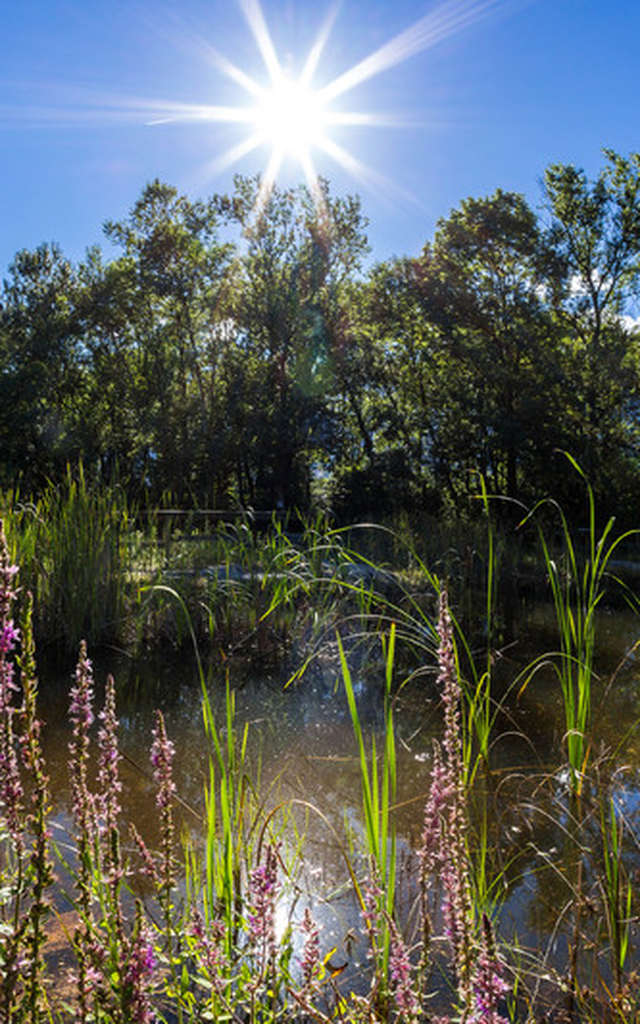 Espace naturel sensible La Rolande