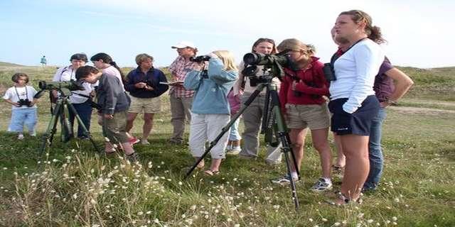 Sortie ornitho : les oiseaux du bois de Lann Ar Waremm