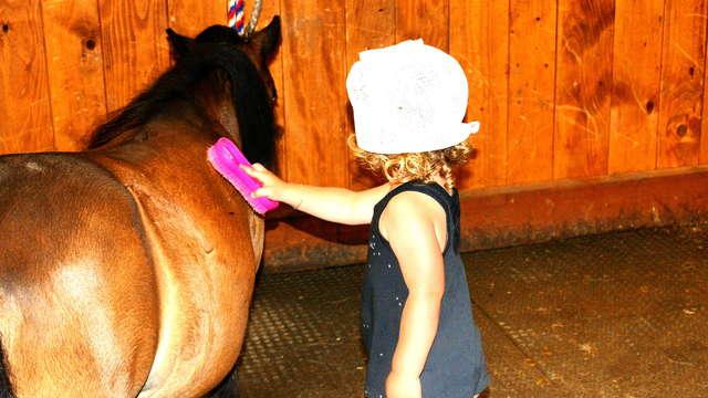 Pony and horses at the Fondation Domus