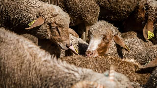 GAEC La Moutonnière