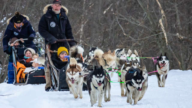 Dog sledding first time