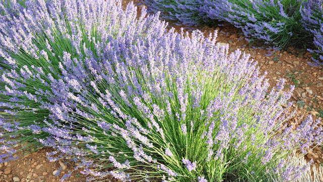 Sentier des plantes aromatiques