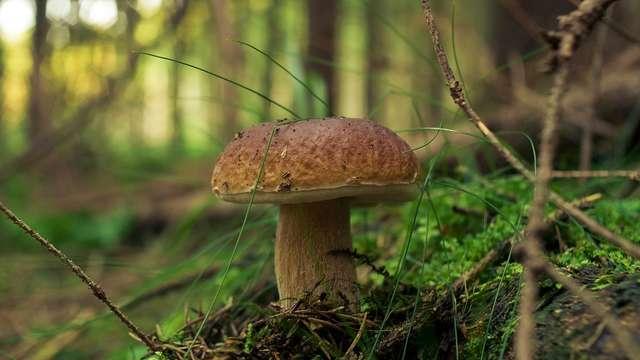 Sortie nature : reconnaissance des champignons