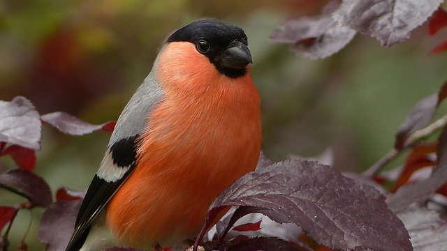 Sortie nature : découverte des oiseaux