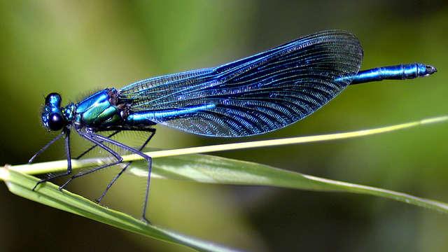 Sortie nature : la faune discrète des bords de Creuse