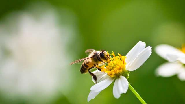 Sortie nature : insectes et petites bêtes qui font beaucoup
